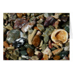 Shells, Rocks and Coral Beach Nature Theme Card