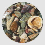 Shells, Rocks and Coral Beach Nature Theme Classic Round Sticker