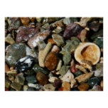 Shells, Rocks and Coral Beach Nature Theme Poster