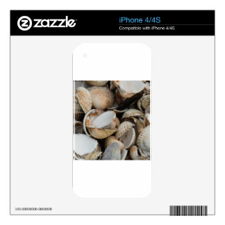 Shells Decal For The iPhone 4S