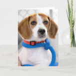 Shelter Beagle Photo Card