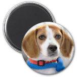 Shelter Beagle Photo Magnet