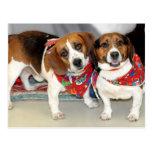 Shelter Beagles Photo Postcard