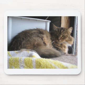 Shelter Cat Mouse Pad
