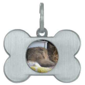 Shelter Cat Pet ID Tag