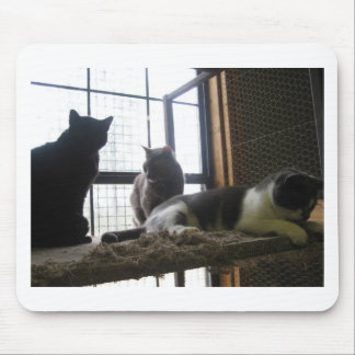 Shelter Cats Mouse Pad