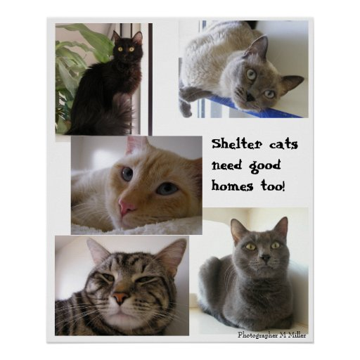 Shelter cats need good homes too posters