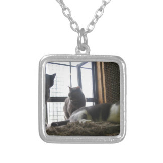 Shelter Cats Silver Plated Necklace