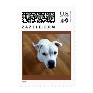 Shelter Dog Postage Stamp