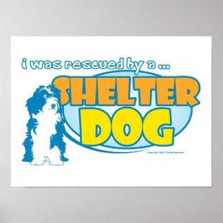 Shelter Dog Poster