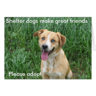 Shelter dogs make great friends 7703 greeting card