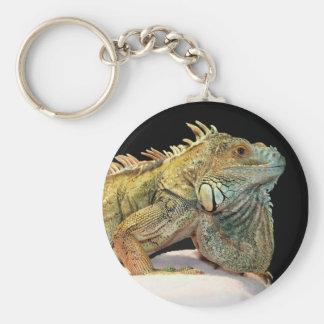 Shelter Iguana Keychains