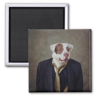 Shelter Pets Project - Casanova Magnet