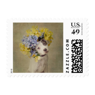 Shelter Pets Project - Rascal Postage