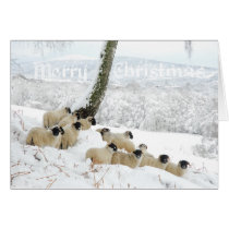Sheltering Flock - Merry Christmas Sheep in Snow Card