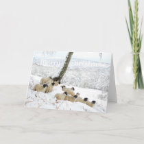 Sheltering Flock - Merry Christmas Sheep in Snow Holiday Card