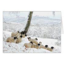Sheltering Flock - Sheep in Snow at Christmas Card
