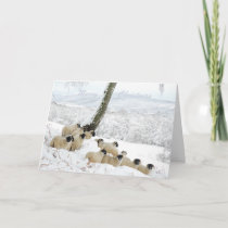 Sheltering Flock - Sheep in Snow at Christmas Holiday Card