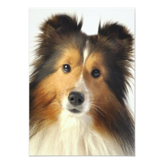 Sheltie cards & gifts invitation
