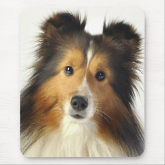 Sheltie cards & gifts mouse pad
