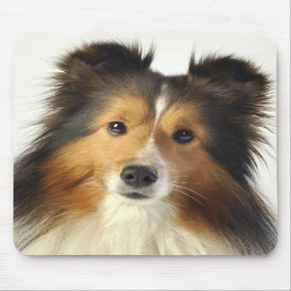 Sheltie cards & gifts mousepads