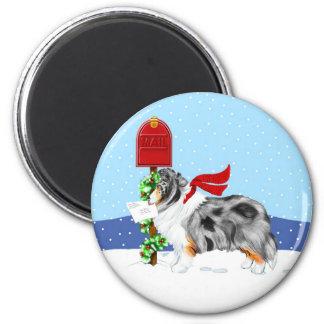 Sheltie Christmas Mail Blue Merle Magnet