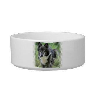 Sheltie Dog Picture Pet Bowl Cat Water Bowls
