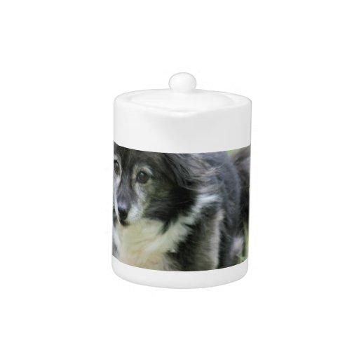 Sheltie Dog Picture Teapot