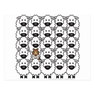 Sheltie en las ovejas tarjetas postales