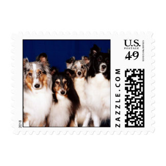 Sheltie Group Stamp