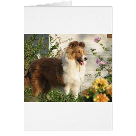 Sheltie in flowers card