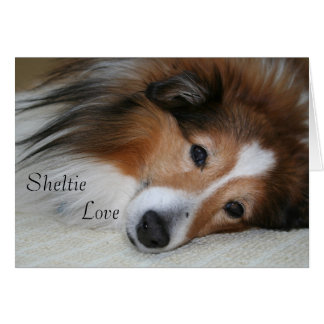 Sheltie Love Cards