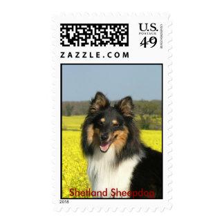 Sheltie, perro pastor de Shetland Sellos