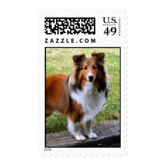 Sheltie Postage Stamps