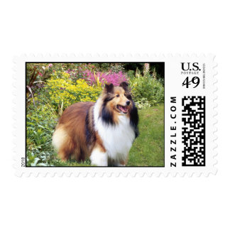Sheltie Postage Stamp