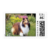 Sheltie Postage Stamp