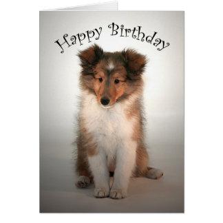 Sheltie Puppy Birthday Card