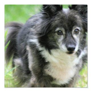 Sheltie Puppy Dog Invitation