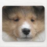 Sheltie puppy face mousepads