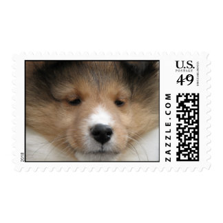 Sheltie puppy face stamp