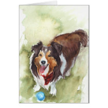 Sheltie/Shetland Sheep Dog Greeting Card
