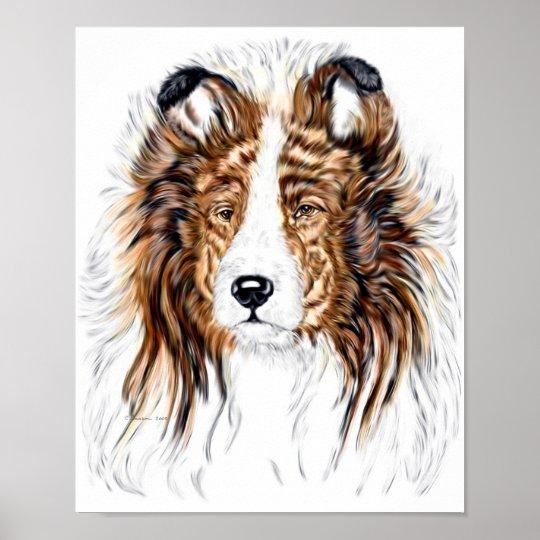 Sheltie Shetland Sheepdog Bust Poster