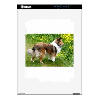 Sheltie Shetland Sheepdog Painting iPad 2 Decal