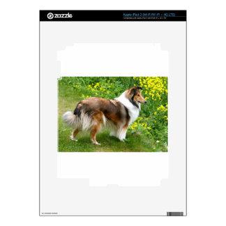 Sheltie Shetland Sheepdog Painting iPad 3 Decals