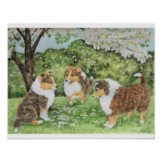 Sheltie Spring Posters