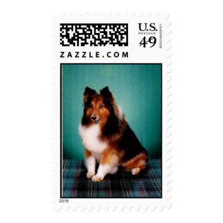 Sheltie Stamp