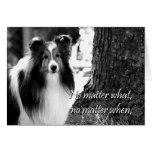 Sheltie Support Card