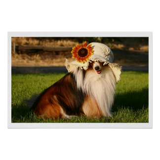 Sheltie with Hat Poster