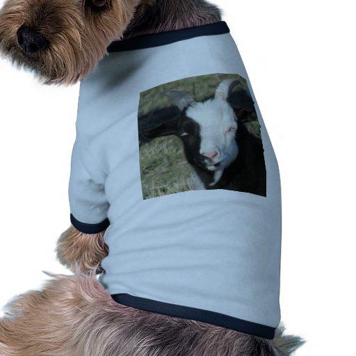 Shelton Goat Farm Dog Clothes