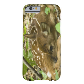 Shenandoah NP, Virginia, USA Barely There iPhone 6 Case